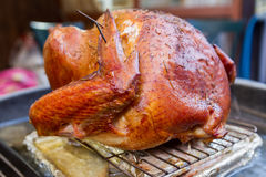 Backyard Grilled Turkey. A cooked Thanksgiving turkey barbecued on a grill in the back yard Royalty Free Stock Photos