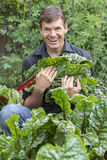 Backyard harvest. Handsome Caucasian man with big smile as he carries harvest of fresh picked chard leaves in backyard garden Stock Image