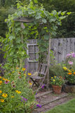 Backyard Hideaway. An old, weathered arbor draped with ornamental grapes hovers over a matching chair, hidden behind a colorful group of black-eyed Susans and Royalty Free Stock Photography