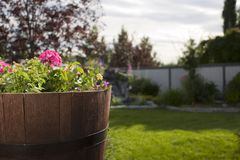 Backyard landscape. Backyard garden on a sunny day Stock Images
