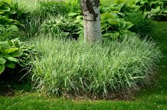 Backyard Landscaping Royalty Free Stock Photography