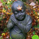 Backyard Maple Buddha Royalty Free Stock Photo