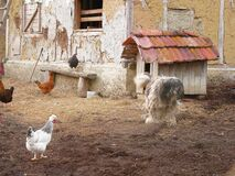 Backyard of an old village house. Hens and dog.