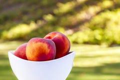 Backyard Peaches Royalty Free Stock Photography