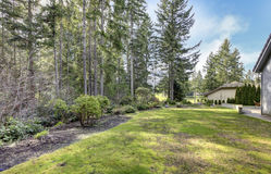 Backyard with pine trees and side of the house. Royalty Free Stock Photography