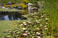 Backyard Pond Water Feature. With Cattails, Lillypads and Flowers royalty free stock image