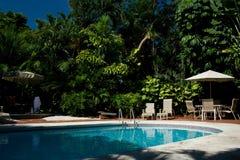 Backyard pool with palm trees Stock Photos