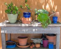 Succulent plants in colorful containers Royalty Free Stock Photography