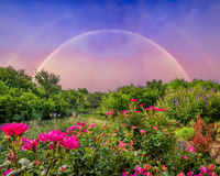 Backyard Rainbow Royalty Free Stock Image
