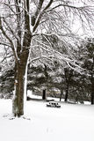 Backyard Snow Scene II Royalty Free Stock Images