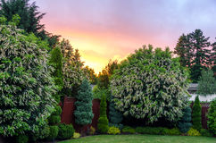 Backyard Sunset. Beautiful sunset in a nice suburban backyard near Portland, Oregon Royalty Free Stock Photos
