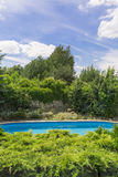 Backyard swimming pool. Surrounded by lush vegetation on a sunny day Royalty Free Stock Image