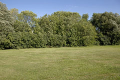 Backyard with trees. Empty lawn in backyard surrounded by trees Royalty Free Stock Image