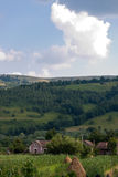 Backyard view 2. Backyard view of a holiday home in the Apuseni Mountains stock photography