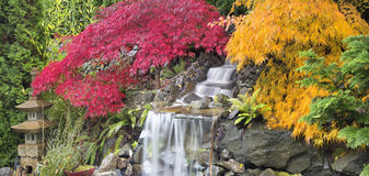 Backyard Waterfall with Japanese Maple Trees Fall. Backyard Waterfall with Japanese Maple Trees in Colorful Fall Season Panorama stock photos