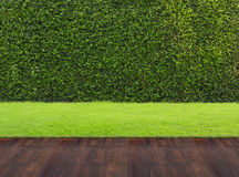 Backyard. Wood floor with background of green grass Stock Image