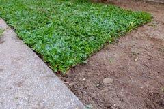 Backyard, yard work planting a new sod grass. In garden Stock Photo