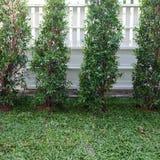 Backyard, yard work planting a new sod grass. Backyard, yard work planting tree and grass in garden Stock Photos