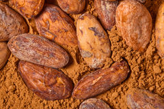 Baclground de cacao Photo stock