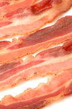 Bacon 520 Stock Image