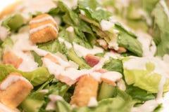 Bacon Caesar Salad com os cubos Shredded do queijo e do pão de Parmeasan Fotografia de Stock