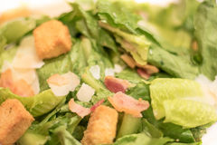 Bacon Caesar Salad com os cubos Shredded do queijo e do pão de Parmeasan Imagem de Stock Royalty Free