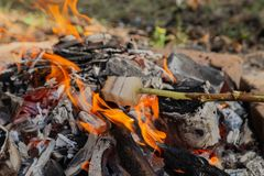 Bacon della frittura su un palo Frittura del bacon su fuoco Frittura grassa nella campagna Accampandosi nella foresta immagine stock libera da diritti