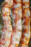 Bacon som steker i en panna Royaltyfria Foton