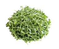Bacopa monnieri Bitter Leaf Stock Image