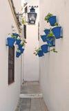 Bacs bleus Photographie stock