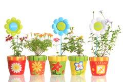 Bacs colorés avec de jolies fleurs Photographie stock