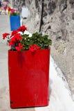Bacs colorés de géranium, Santorini, Grèce Photo libre de droits
