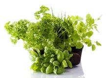Bacs d'herbe de cuisine Image libre de droits