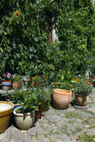 Bacs de fleur de jardin Photos libres de droits