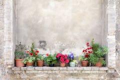 Bacs de fleur sur un mur antique en Toscane Photographie stock