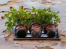 Bacs de fleurs Photographie stock