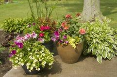 Bacs de fleurs colorées Photographie stock libre de droits