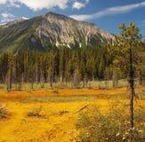Bacs de peinture - Kootenay N.P. - le Canada Photographie stock libre de droits