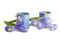 Bacs de yaourt avec des iris images stock