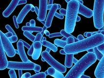 Bactérias ilustração do vetor