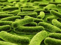 Bactérias Foto de Stock