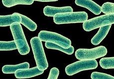 Bactérias Fotos de Stock