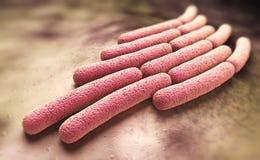 Bactérias do sonnei do Shigella Fotografia de Stock