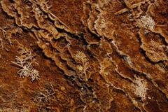 Bactérias e folhas Geothermal imagens de stock