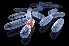 Bactérias transformadas Fotos de Stock