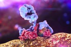Bactérie de attaque d'anticorps illustration libre de droits