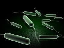 Bactéries de Coli Photographie stock libre de droits