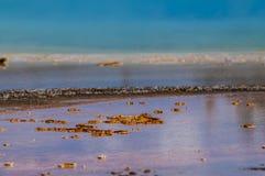 Bactéries de geyser en gros plan Photos libres de droits