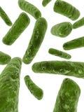 Bactéries importantes illustration libre de droits