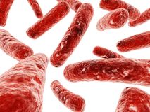 Bactéries importantes Photographie stock libre de droits
